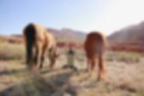 Liz and Horses_small.jpeg