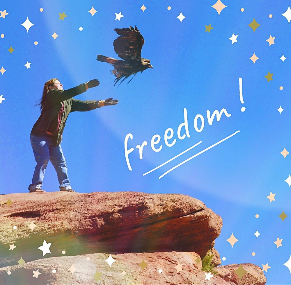 Eagle flying, releasing eagle, raptor rehab, taking flight, flying free, eagle