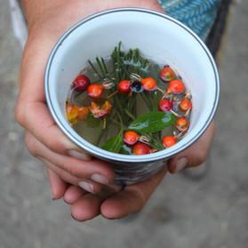 Wild Berry and Ponderosa Tea