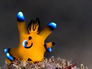 Pikachu Nudibranch