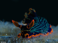 Variable Neon Slug (B)