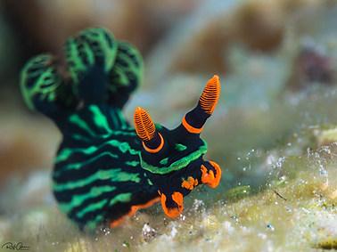 Variable Neon Slug (A)