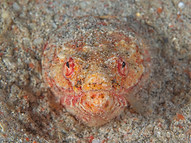 Reptilian Snake Eel