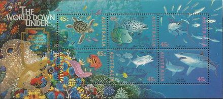 AUSTRALIA 1995 - Adelaide - Hypselodoris