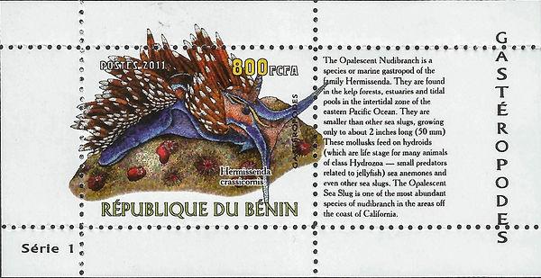 BENIN 2011 Hermissenda crassicornis.jpg