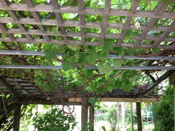 Green Gems Garden day one