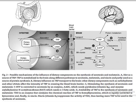 Tryptophan - Bioavailability & Mood Disorders