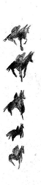 horsesversus-logo.jpg