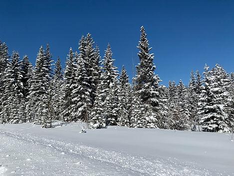 ski de fond 15 mars 2020 (6).jpg