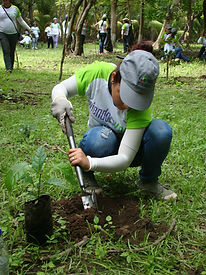 Voluntario ambiental