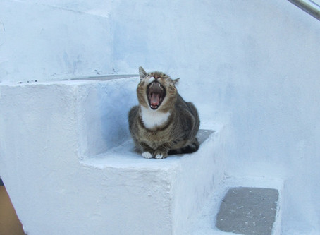 Katzenglück indoor und outdoor