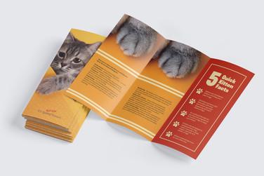 Design Thesis Brochure