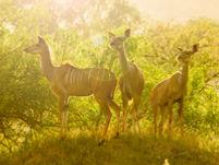 Explorer_Kruger-Safari.jpg