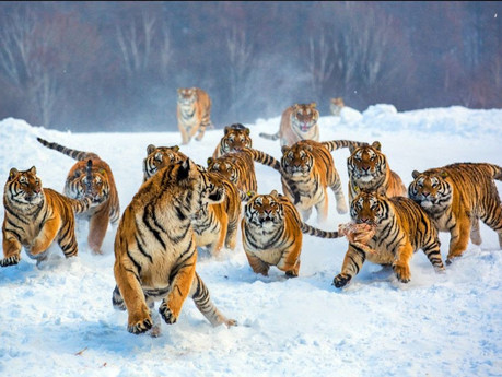 Tiger Tail Recipes