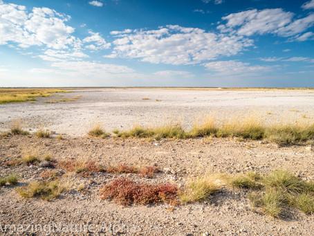 Namibia SELF DRIVE TOUR Tag 13 - Unfall in Etosha