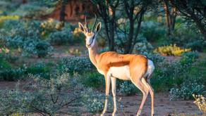 Namibia SELF DRIVE TOUR Tag 17/18 - Verhandeln ist alles  ;-)