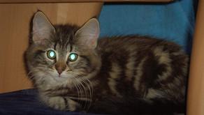 Rote Augen beim Blitzen - wie wir es vermeiden können!