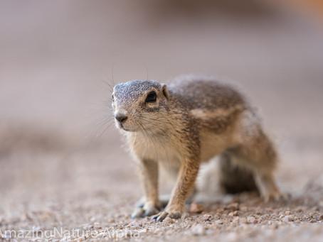 Namibia SELF DRIVE TOUR Tag 7 - Sonne und Streifenhörnchen