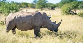 Namibia SELF DRIVE TOUR Tag 16 - Zwischen Nashörnern