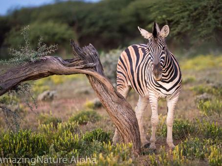 Namibia SELF DRIVE TOUR Tag 2 - Erindi
