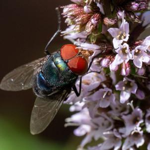 Spannende Insekten im Garten