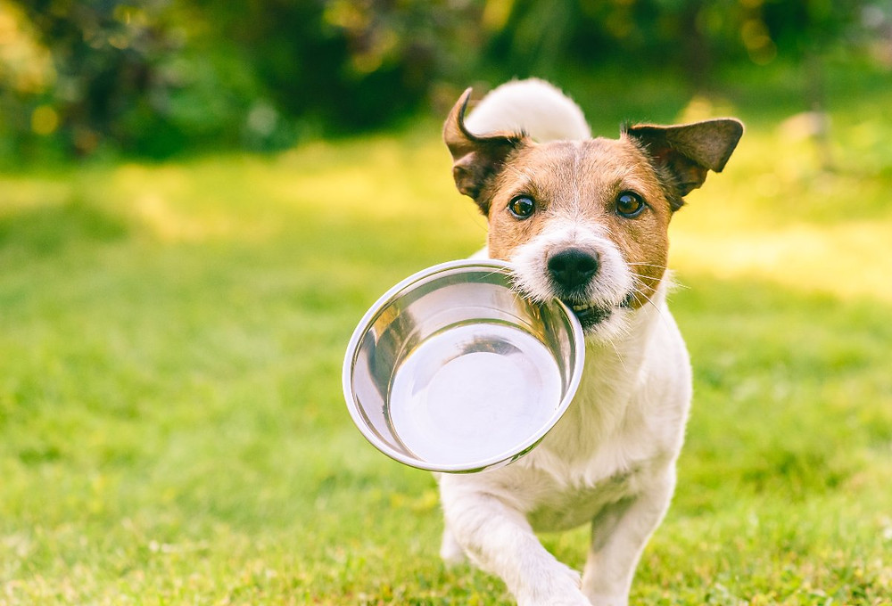 Dog with an empty food bowl