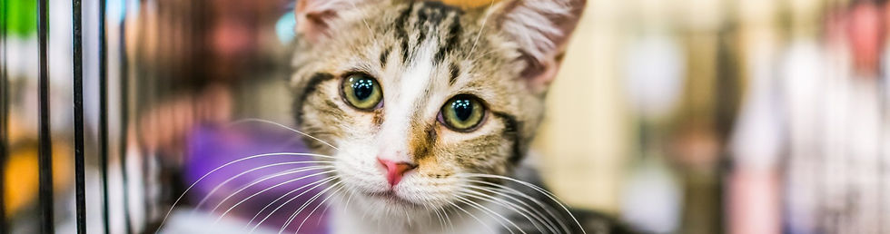 Adopt a cat from Rural Animal Rescue Eff