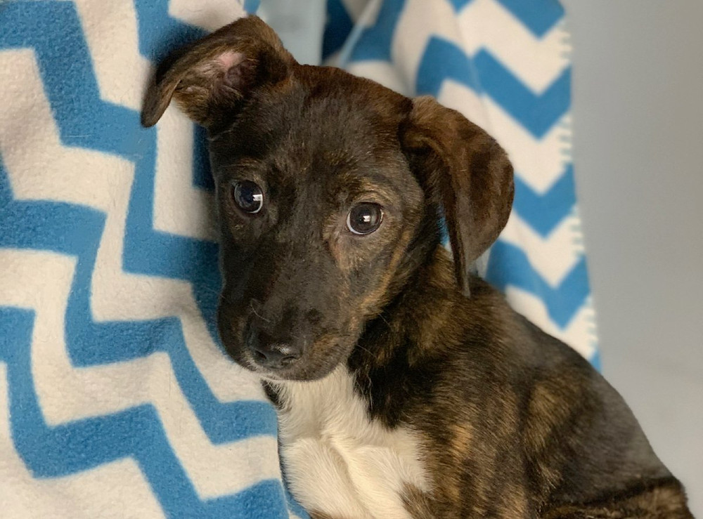 Puppy rescued from a property in rural Tennessee