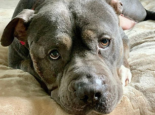 Scotty, dog rescued by Rural Animal Resc