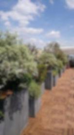 Locations plantes - Aménagement Terrasse