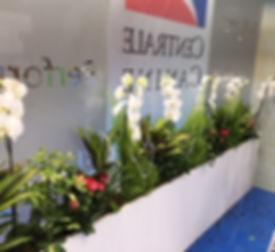 orchidées rosiers pour salons