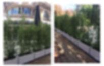 bacs bambous, bacs exterieur, composition dans bacs, bacs isolants, bacs terrasse,