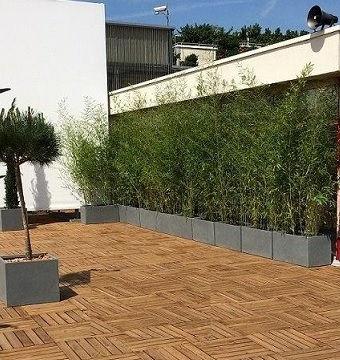 bambous dans bacs terrsse Paris