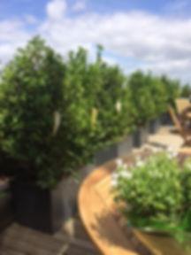 St Thibault Aménagement de terrasse