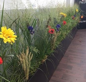 décor naturel des champs