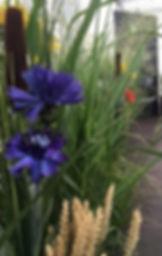 décor avec bleuets