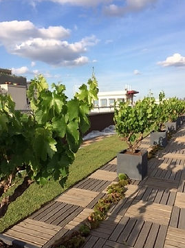 location de vignes