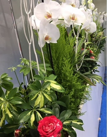 orchidées et rosiers pour expositions