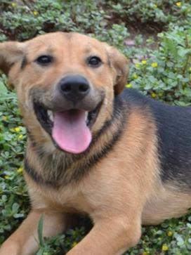 Baron now Cooper Adopted November 2016