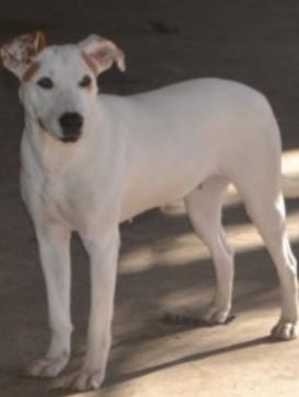 Luna Adopted February 2017