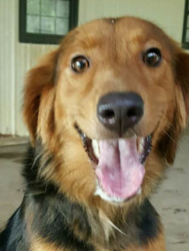 Jessi Adopted August 2017