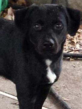 Zakk Adopted January 2017