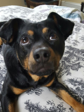 Beau Duke Adopted April 2017