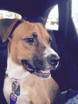 Stella Adopted September 2016
