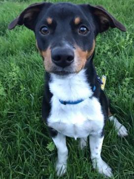 Pip  Adopted May 2017