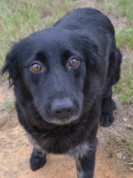 Abby Adopted November 2016