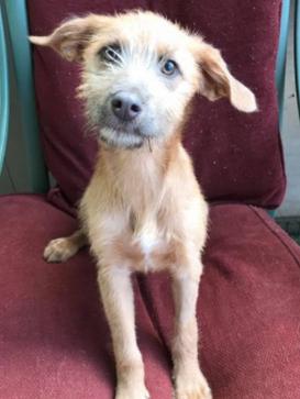 Charlotte Adopted May 2017