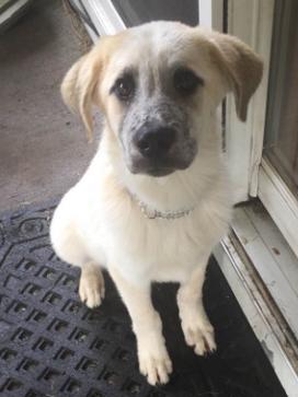 Thomas J (TJ) Adopted July 2017
