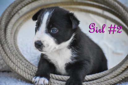 girl #2.jpg