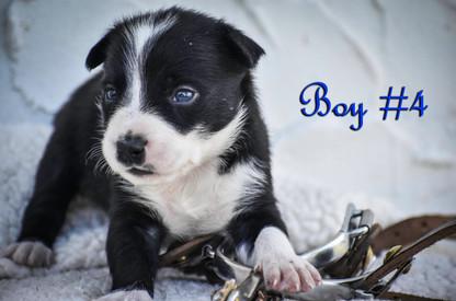 boy #4.jpg